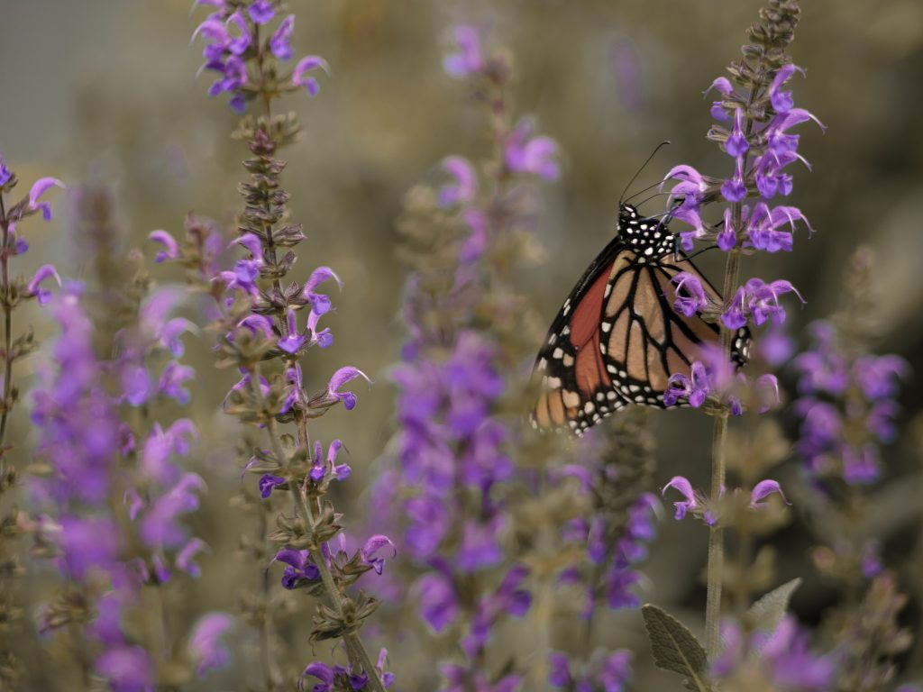 Butterfly perched on some flowers